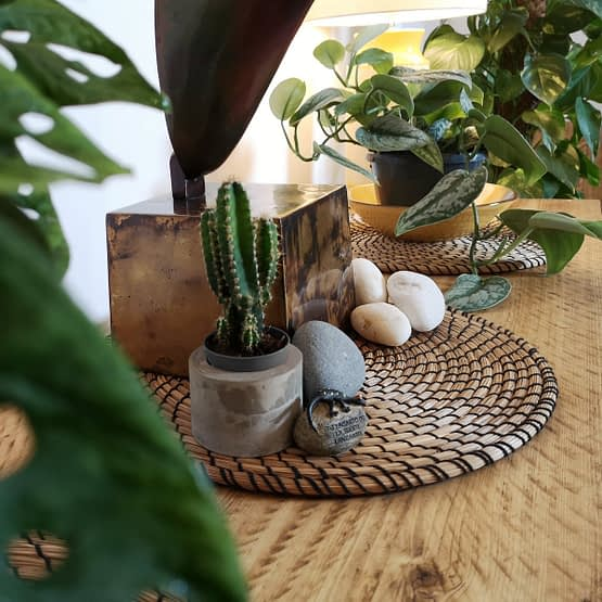 A rustic tv media unit with cacti plant and pebbles